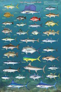 saltwatergame